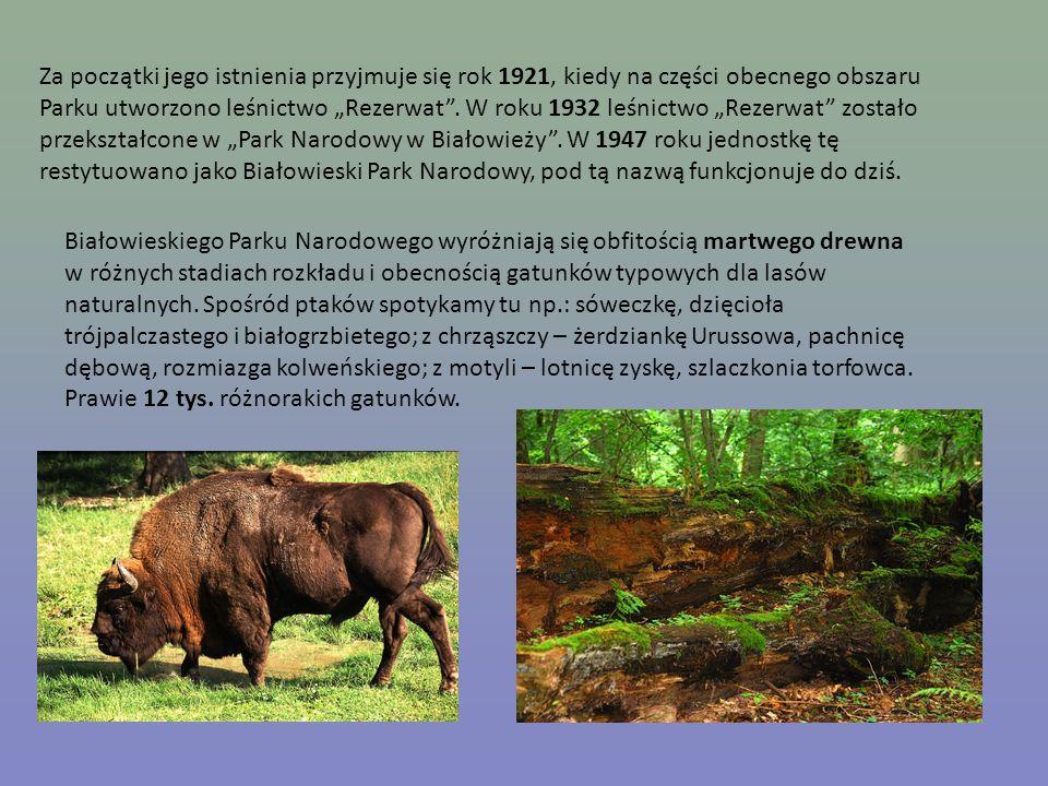 Za początki jego istnienia przyjmuje się rok 1921, kiedy na części obecnego obszaru Parku utworzono leśnictwo Rezerwat. W roku 1932 leśnictwo Rezerwat