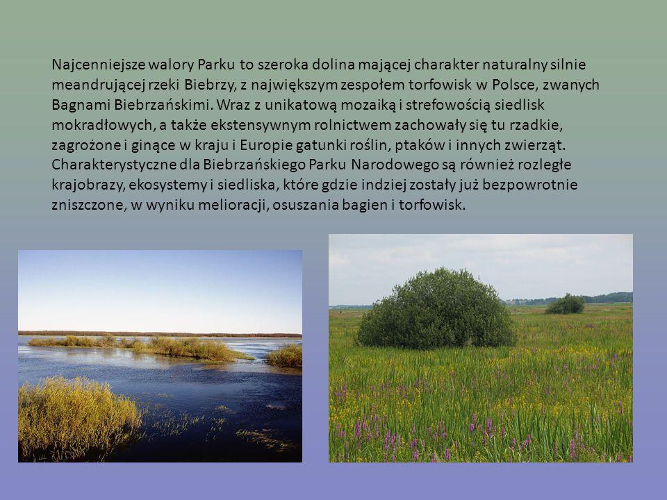 Najcenniejsze walory Parku to szeroka dolina mającej charakter naturalny silnie meandrującej rzeki Biebrzy, z największym zespołem torfowisk w Polsce,
