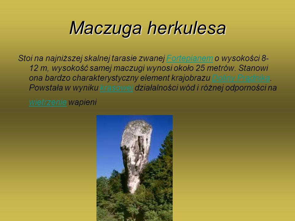 Maczuga herkulesa Stoi na najniższej skalnej tarasie zwanej Fortepianem o wysokości 8- 12 m, wysokość samej maczugi wynosi około 25 metrów. Stanowi on