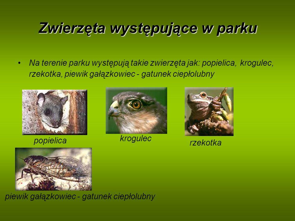 Zwierzęta występujące w parku Na terenie parku występują takie zwierzęta jak: popielica, krogulec, rzekotka, piewik gałązkowiec - gatunek ciepłolubny