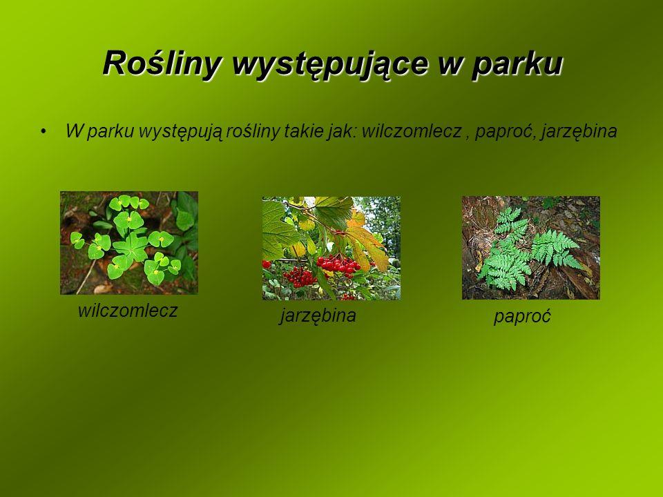 Rośliny występujące w parku W parku występują rośliny takie jak: wilczomlecz, paproć, jarzębina paproć jarzębina wilczomlecz