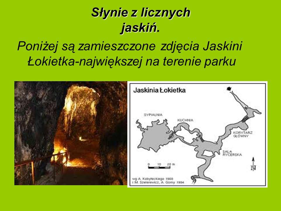 Słynie z licznych jaskiń Słynie z licznych jaskiń. Poniżej są zamieszczone zdjęcia Jaskini Łokietka-największej na terenie parku