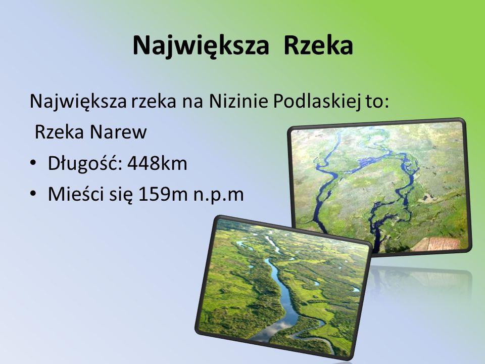 Największa Rzeka Największa rzeka na Nizinie Podlaskiej to: Rzeka Narew Długość: 448km Mieści się 159m n.p.m