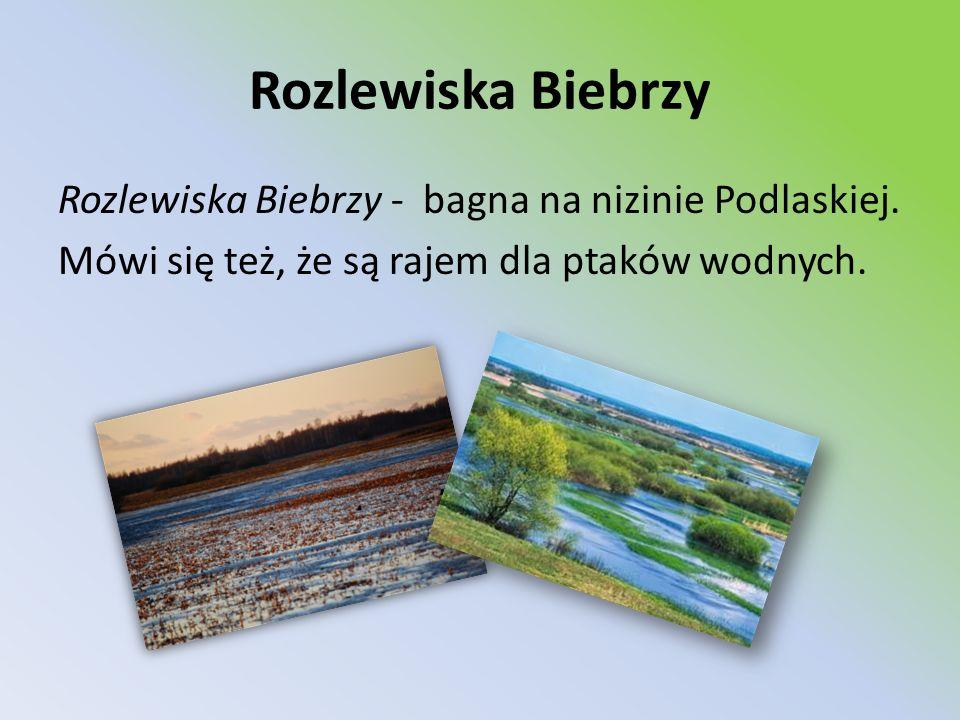 Rozlewiska Biebrzy Rozlewiska Biebrzy - bagna na nizinie Podlaskiej. Mówi się też, że są rajem dla ptaków wodnych.