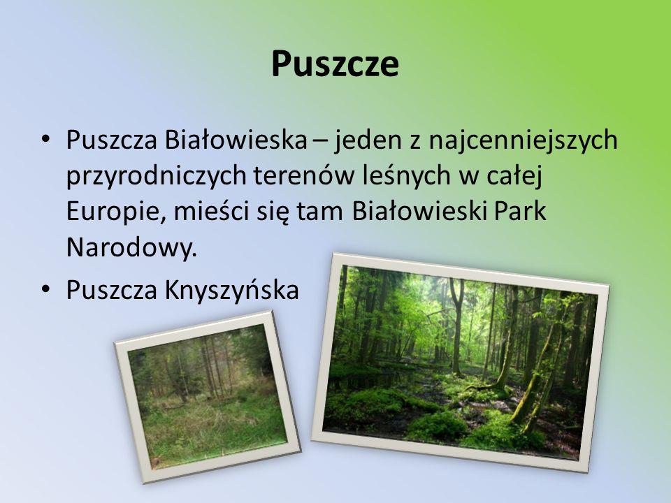 Puszcze Puszcza Białowieska – jeden z najcenniejszych przyrodniczych terenów leśnych w całej Europie, mieści się tam Białowieski Park Narodowy. Puszcz