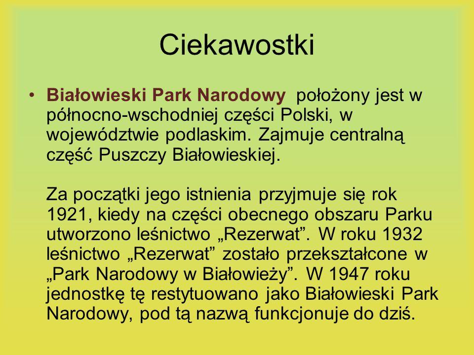 Ciekawostki Białowieski Park Narodowy położony jest w północno-wschodniej części Polski, w województwie podlaskim. Zajmuje centralną część Puszczy Bia
