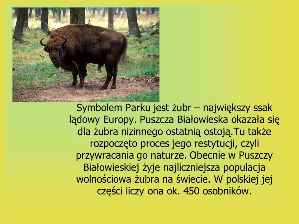 Symbolem Parku jest żubr – największy ssak lądowy Europy. Puszcza Białowieska okazała się dla żubra nizinnego ostatnią ostoją.Tu także rozpoczęto proc