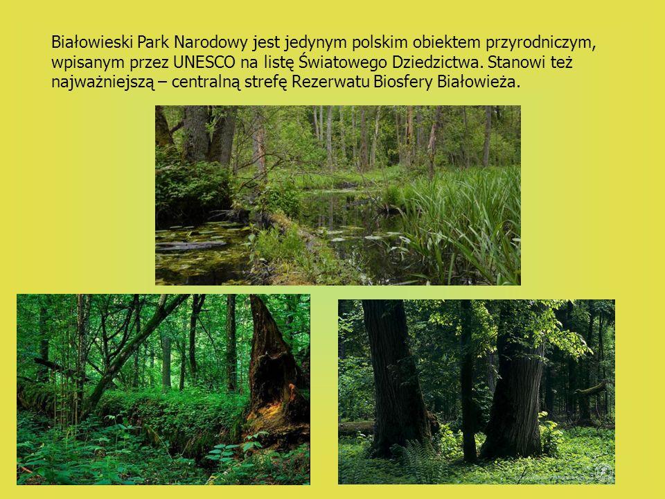 Białowieski Park Narodowy jest jedynym polskim obiektem przyrodniczym, wpisanym przez UNESCO na listę Światowego Dziedzictwa. Stanowi też najważniejsz