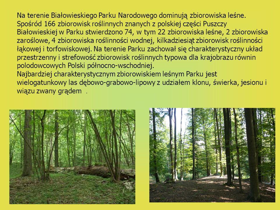 Na terenie Białowieskiego Parku Narodowego dominują zbiorowiska leśne. Spośród 166 zbiorowisk roślinnych znanych z polskiej części Puszczy Białowieski