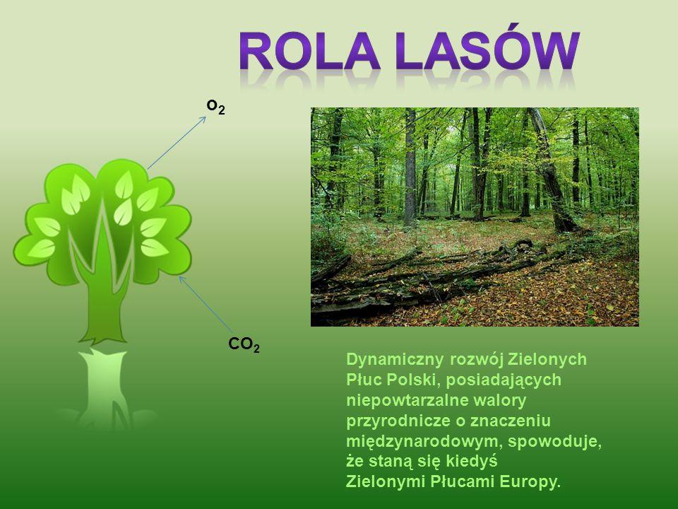 Celem programu Zielone Płuca Polski jest podnoszenie poziomu wiedzy o walorach przyrodniczych i kulturowych środowiska mieszkańców regionu, Polski i E