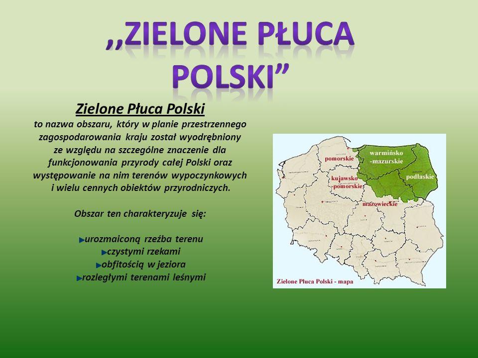 Prezentacj ę wykonała : Paulina Tarasiuk Paulina Prusator Magda Wolfram