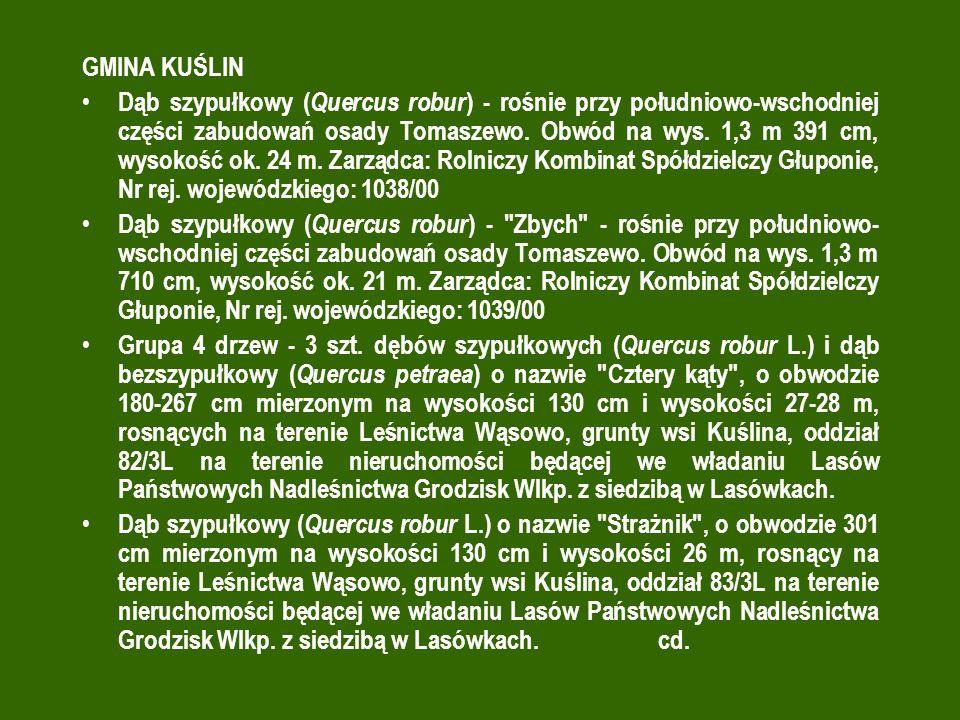 GMINA KUŚLIN Dąb szypułkowy ( Quercus robur ) - rośnie przy południowo-wschodniej części zabudowań osady Tomaszewo.