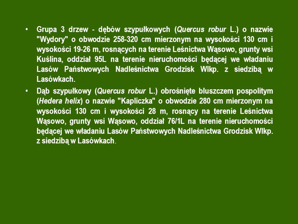 Grupa 3 drzew - dębów szypułkowych ( Quercus robur L.) o nazwie Wydory o obwodzie 258-320 cm mierzonym na wysokości 130 cm i wysokości 19-26 m, rosnących na terenie Leśnictwa Wąsowo, grunty wsi Kuślina, oddział 95L na terenie nieruchomości będącej we władaniu Lasów Państwowych Nadleśnictwa Grodzisk Wlkp.