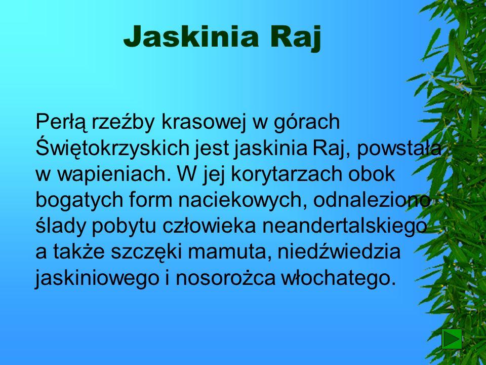 Łysica Najwyższym szczytem Gór Świętokrzyskich jest Łysica. W przeszłości wierzono, że tam właśnie odbywają się zloty czarownic.