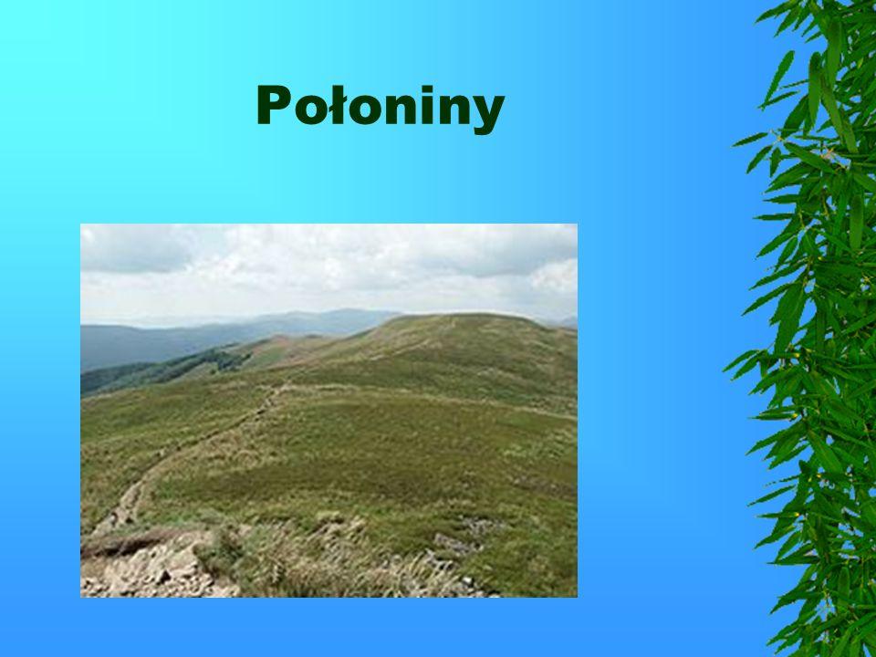 Najwyższy szczyt to Tarnica