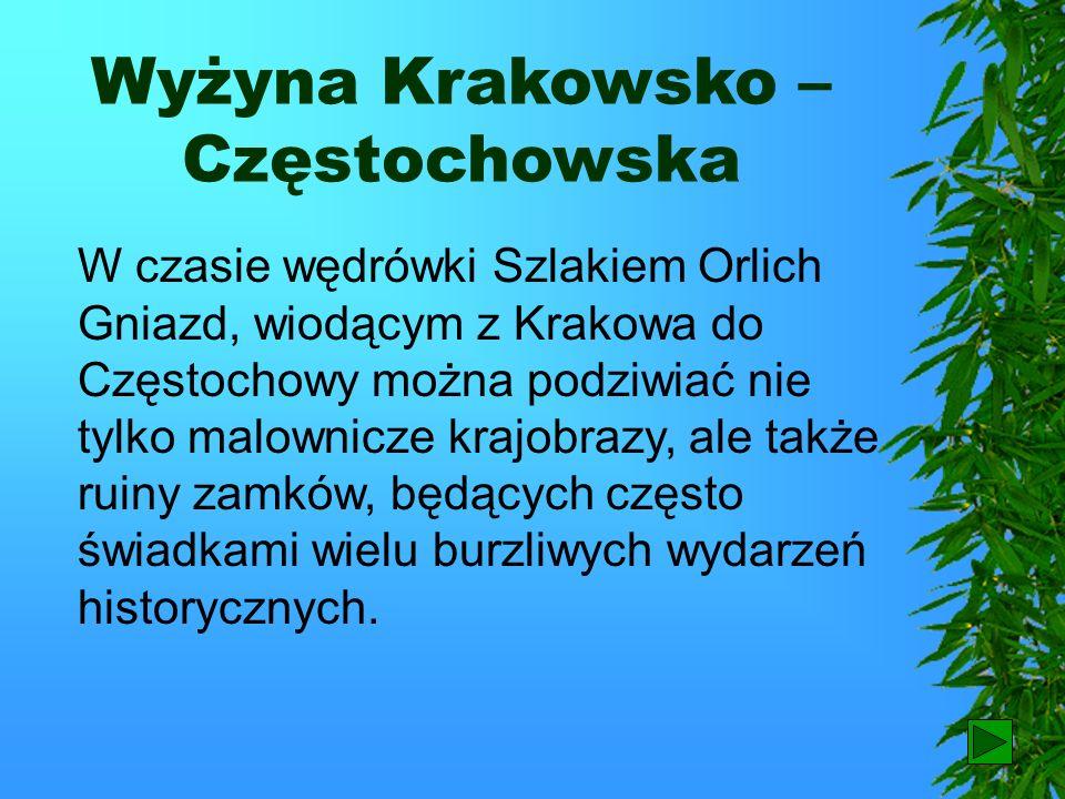 Wyżyna Krakowsko – Częstochowska W podziemnych korytarzach jaskiń możemy zobaczyć wyjątkowo piękne formy w kształcie wapiennych sopli i kolumn.