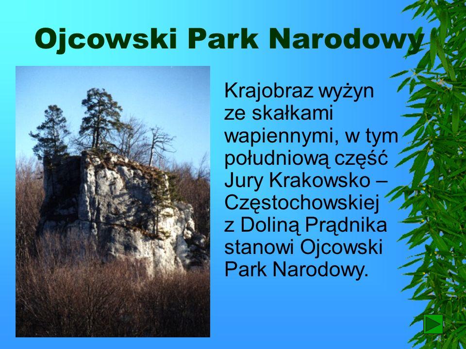 Kraków Stolicą regionu jest Kraków, zbudowany na Wzgórzu Wawelskim. Obok zamku powstało miasto, które przez kilka wieków było stolicą państwa i siedzi
