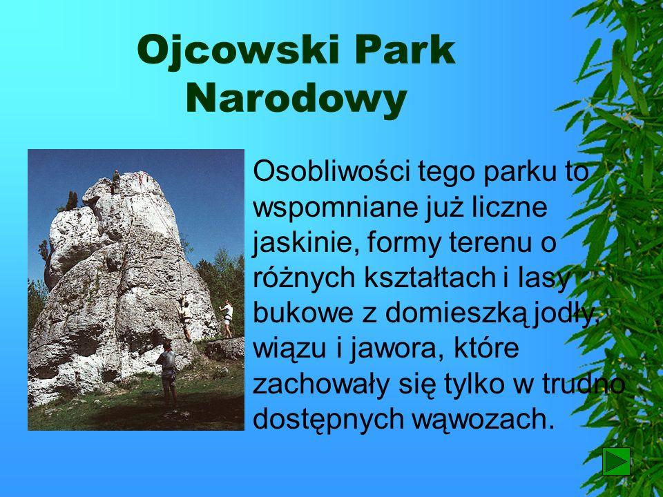 Ojcowski Park Narodowy Krajobraz wyżyn ze skałkami wapiennymi, w tym południową część Jury Krakowsko – Częstochowskiej z Doliną Prądnika stanowi Ojcow