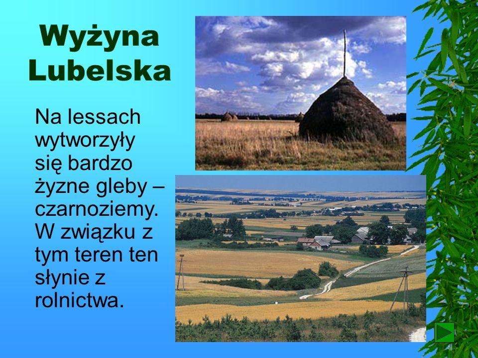 Wyżyna Lubelska Wyżyna Lubelska jest najdalej wysuniętą na wschód Polski. Spotyka się tu wąwozy lessowe. Powstają one w skale zbliżonej wyglądem do gl
