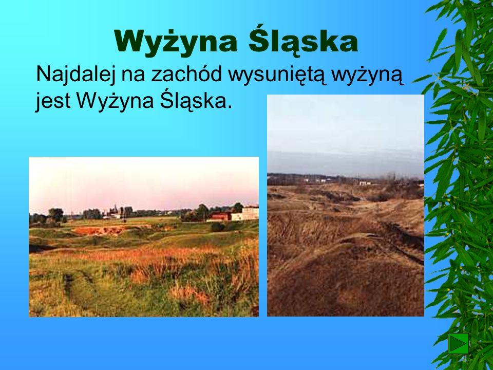 Wyżyna Lubelska Na lessach wytworzyły się bardzo żyzne gleby – czarnoziemy. W związku z tym teren ten słynie z rolnictwa.