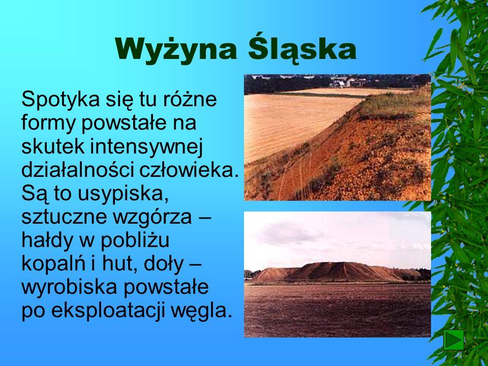Wyżyna Śląska Najdalej na zachód wysuniętą wyżyną jest Wyżyna Śląska.