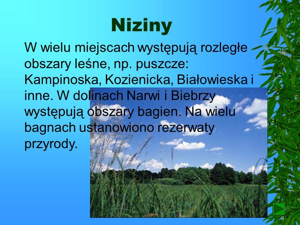 Niziny Przeważającą część Polski zajmują niziny. Są to obszary często płaskie, niekiedy lekko faliste lub pagórkowate. Przecinają je szerokie doliny r