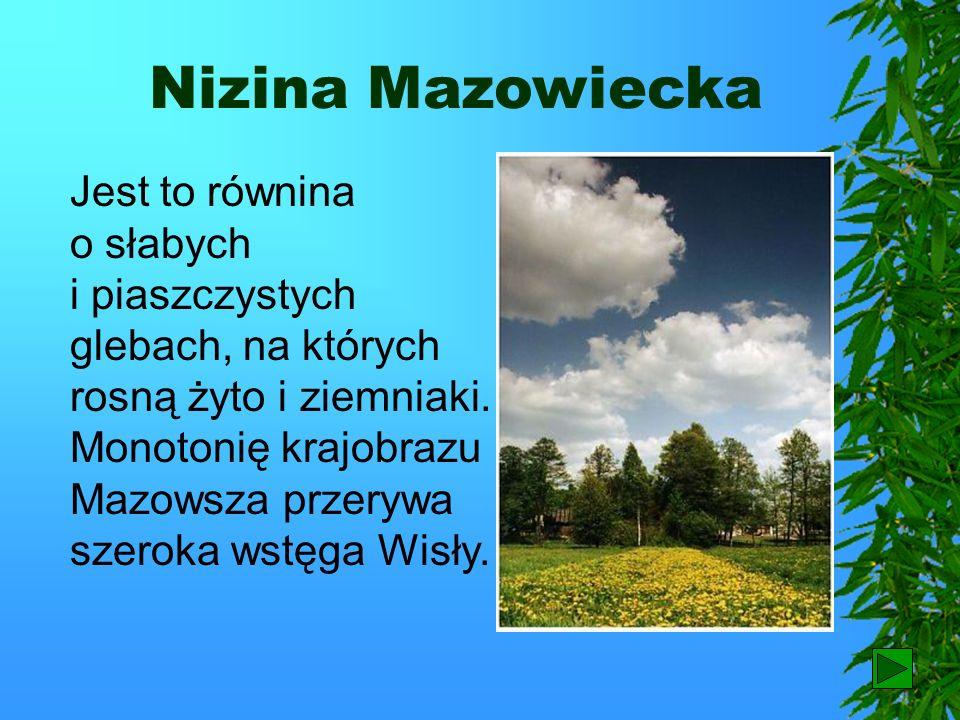 Niziny W wielu miejscach występują rozległe obszary leśne, np. puszcze: Kampinoska, Kozienicka, Białowieska i inne. W dolinach Narwi i Biebrzy występu
