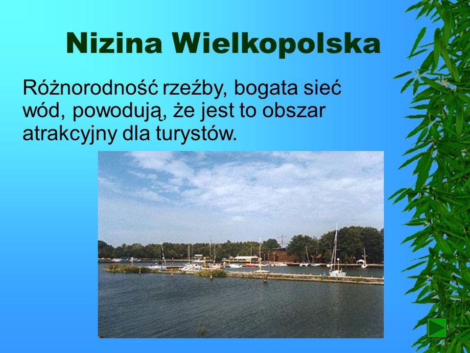Wrocław Stolicą całego regionu jest Wrocław. Należy on do największych miast w Polsce.