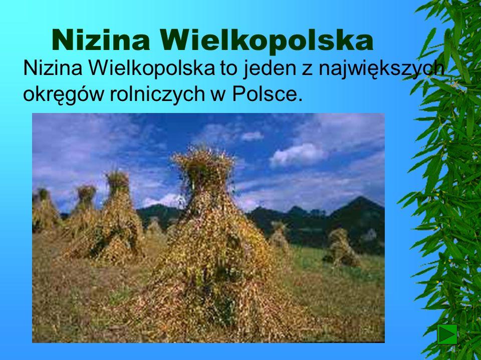 Wielkopolski Park Narodowy Przyroda na tym terenie jest chroniona dzięki utworzeniu Wielkopolskiego Parku Narodowego.