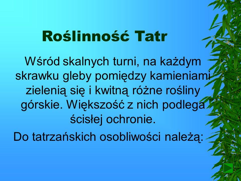 Morskie Oko U podnóża Rysów znajduje się największe w Tatrach jezioro – Morskie Oko.