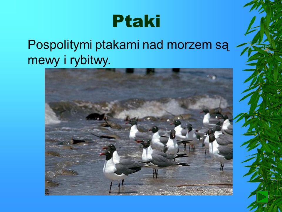 Woliński Park Narodowy Ciekawą roślinność i zwierzęta można oglądać również w Wolińskim Parku Narodowym. Gnieździ się tutaj orzeł bielik – symbol park