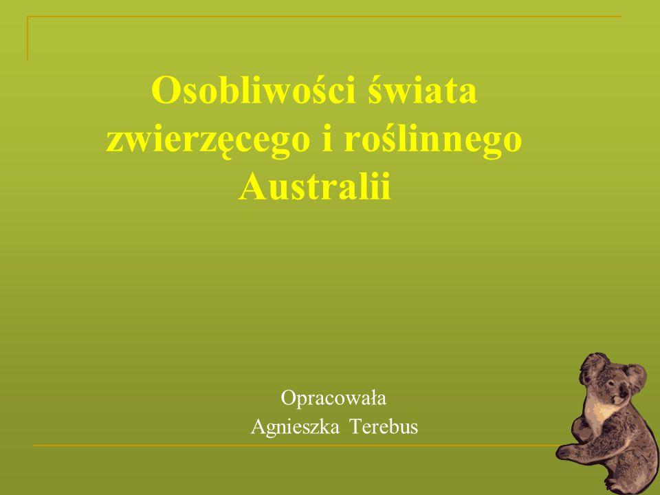 Osobliwości świata zwierzęcego i roślinnego Australii Opracowała Agnieszka Terebus