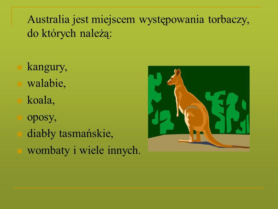 Australia jest miejscem występowania torbaczy, do których należą: kangury, walabie, koala, oposy, diabły tasmańskie, wombaty i wiele innych.