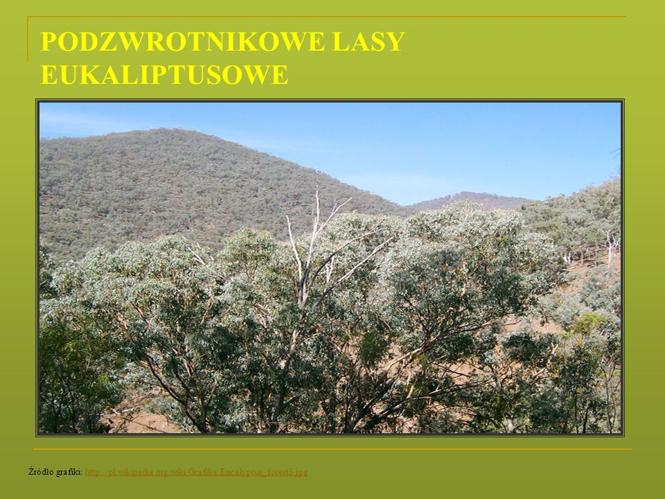 PODZWROTNIKOWE LASY EUKALIPTUSOWE Źródło grafiki: http://pl.wikipedia.org/wiki/Grafika:Eucalyptus_forest3.jpghttp://pl.wikipedia.org/wiki/Grafika:Euca