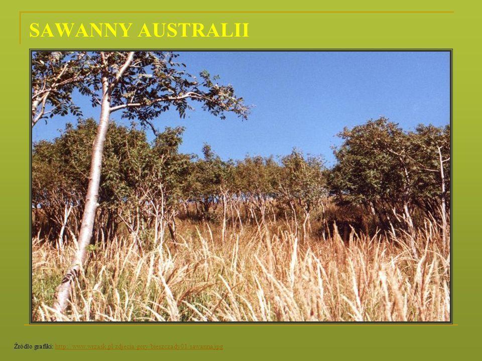 SAWANNY AUSTRALII Źródło grafiki: http://www.wrzask.pl/zdjecia/gory/bieszczady01/sawanna.jpghttp://www.wrzask.pl/zdjecia/gory/bieszczady01/sawanna.jpg