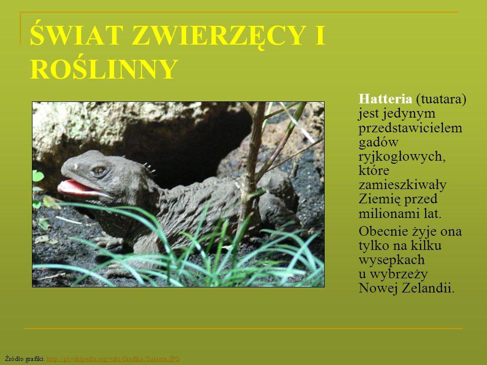 ŚWIAT ZWIERZĘCY I ROŚLINNY Hatteria (tuatara) jest jedynym przedstawicielem gadów ryjkogłowych, które zamieszkiwały Ziemię przed milionami lat. Obecni