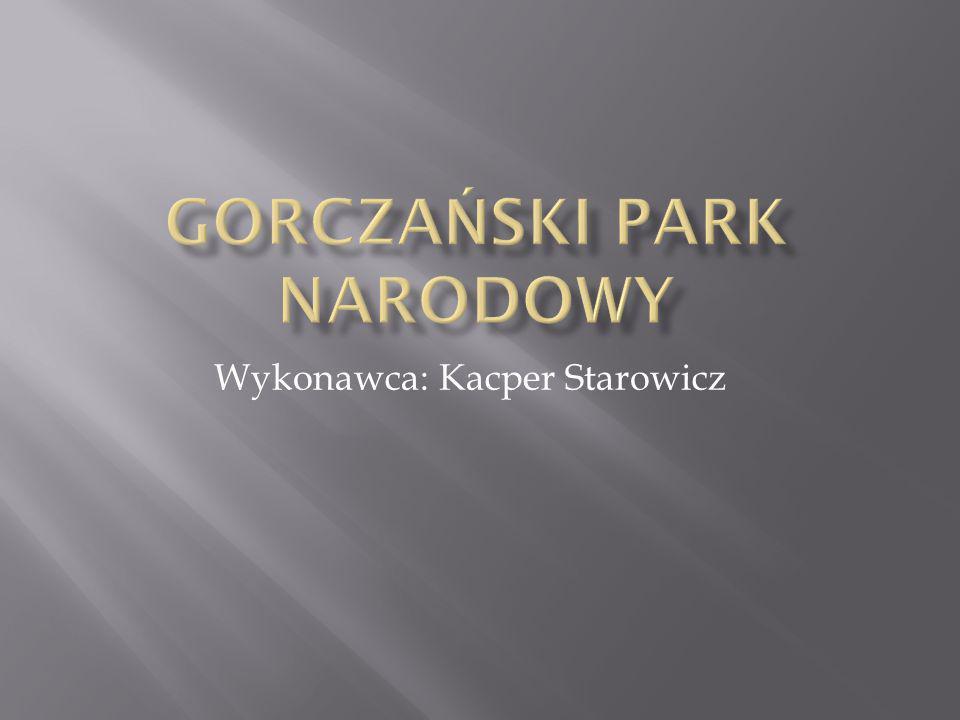 Wykonawca: Kacper Starowicz