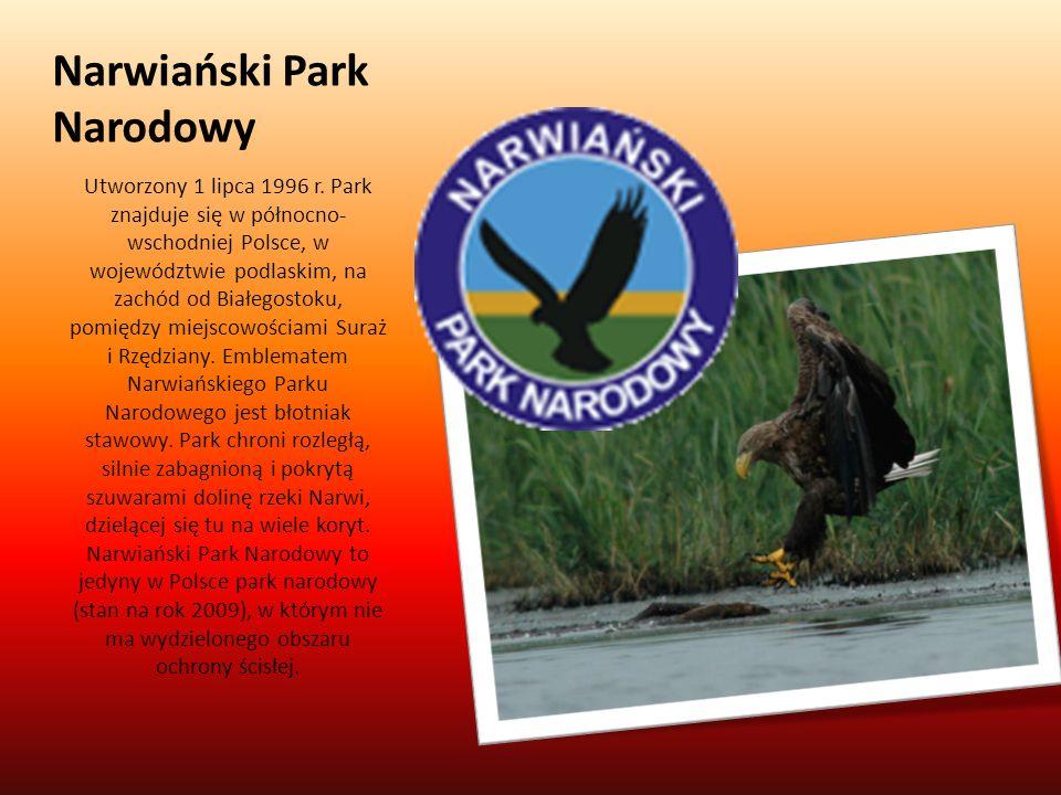 Narwiański Park Narodowy Utworzony 1 lipca 1996 r. Park znajduje się w północno- wschodniej Polsce, w województwie podlaskim, na zachód od Białegostok