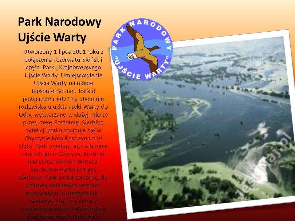 Park Narodowy Ujście Warty Utworzony 1 lipca 2001 roku z połączenia rezerwatu Słońsk i części Parku Krajobrazowego Ujście Warty. Umiejscowienie Ujścia