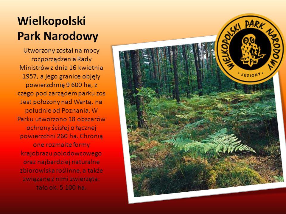 Wielkopolski Park Narodowy Utworzony został na mocy rozporządzenia Rady Ministrów z dnia 16 kwietnia 1957, a jego granice objęły powierzchnię 9 600 ha, z czego pod zarządem parku zos Jest położony nad Wartą, na południe od Poznania.