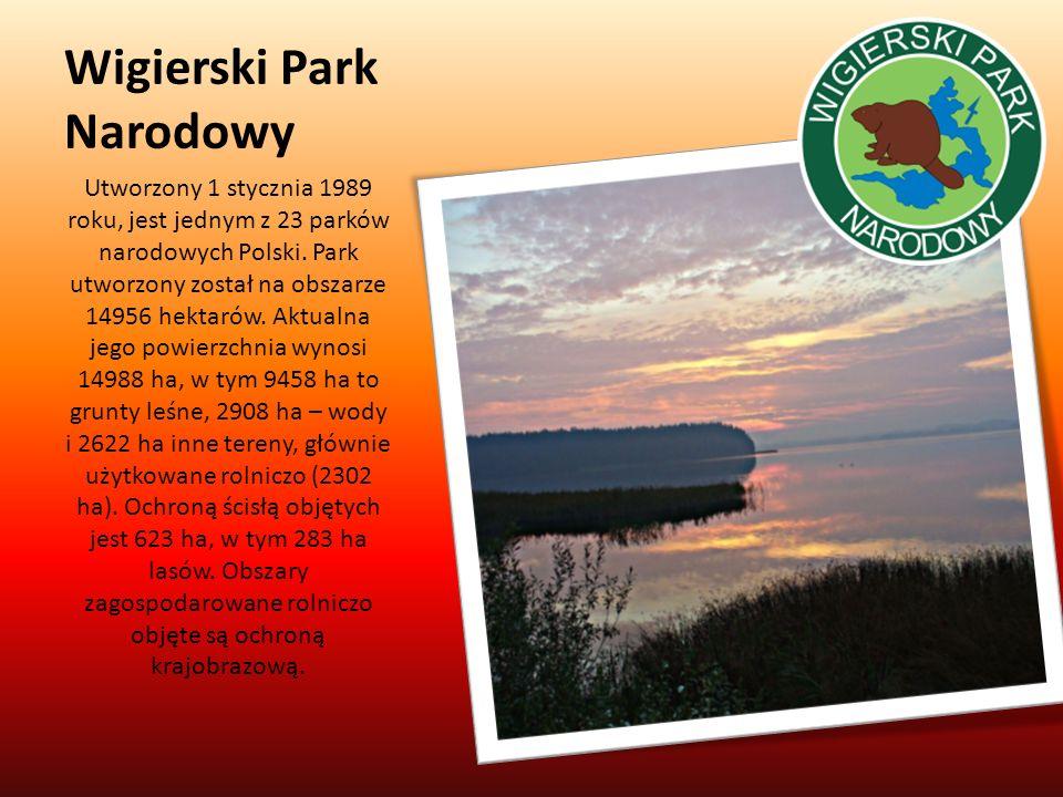 Wigierski Park Narodowy Utworzony 1 stycznia 1989 roku, jest jednym z 23 parków narodowych Polski. Park utworzony został na obszarze 14956 hektarów. A