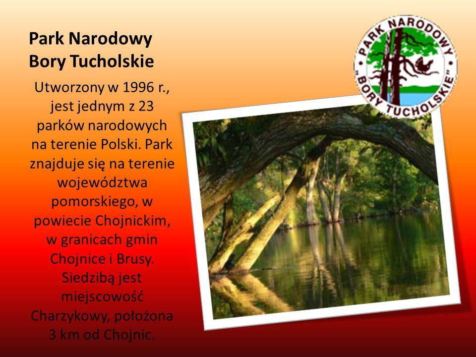 Park Narodowy Bory Tucholskie Utworzony w 1996 r., jest jednym z 23 parków narodowych na terenie Polski. Park znajduje się na terenie województwa pomo