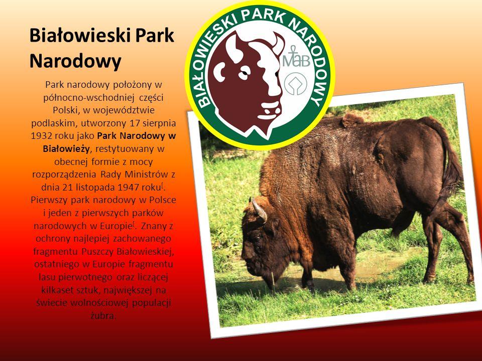 Białowieski Park Narodowy Park narodowy położony w północno-wschodniej części Polski, w województwie podlaskim, utworzony 17 sierpnia 1932 roku jako P