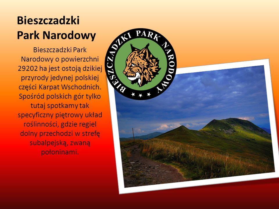 Bieszczadzki Park Narodowy Bieszczadzki Park Narodowy o powierzchni 29202 ha jest ostoją dzikiej przyrody jedynej polskiej części Karpat Wschodnich. S