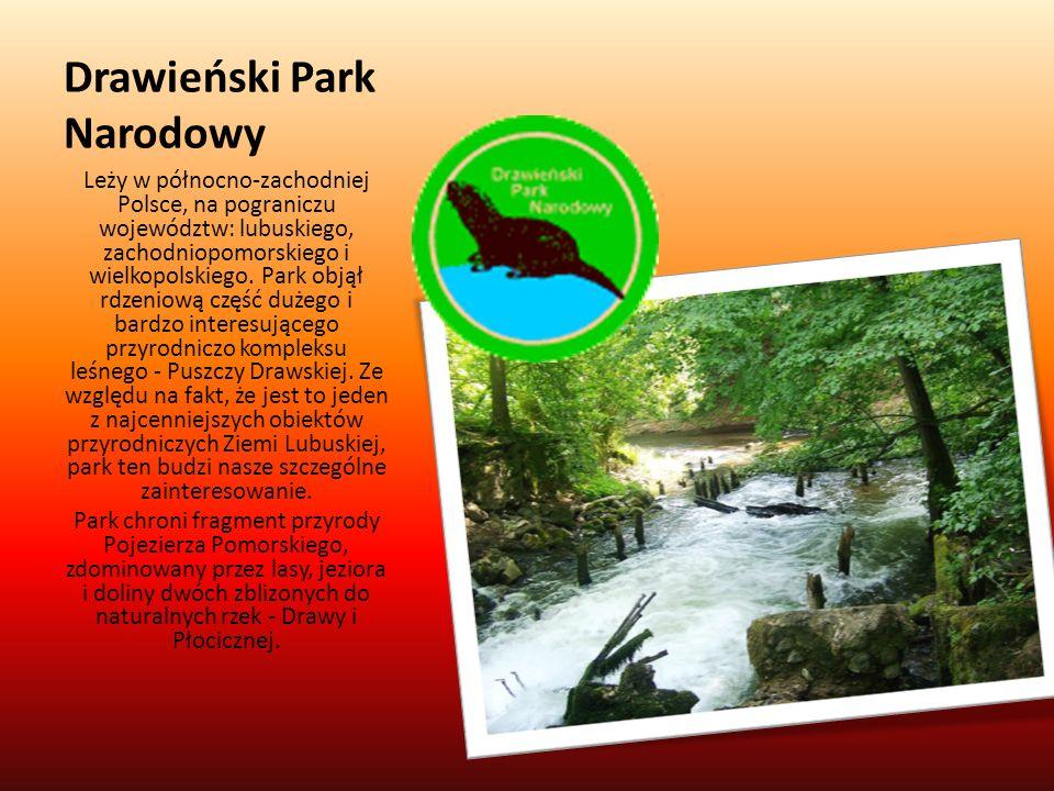 Drawieński Park Narodowy Leży w północno-zachodniej Polsce, na pograniczu województw: lubuskiego, zachodniopomorskiego i wielkopolskiego. Park objął r