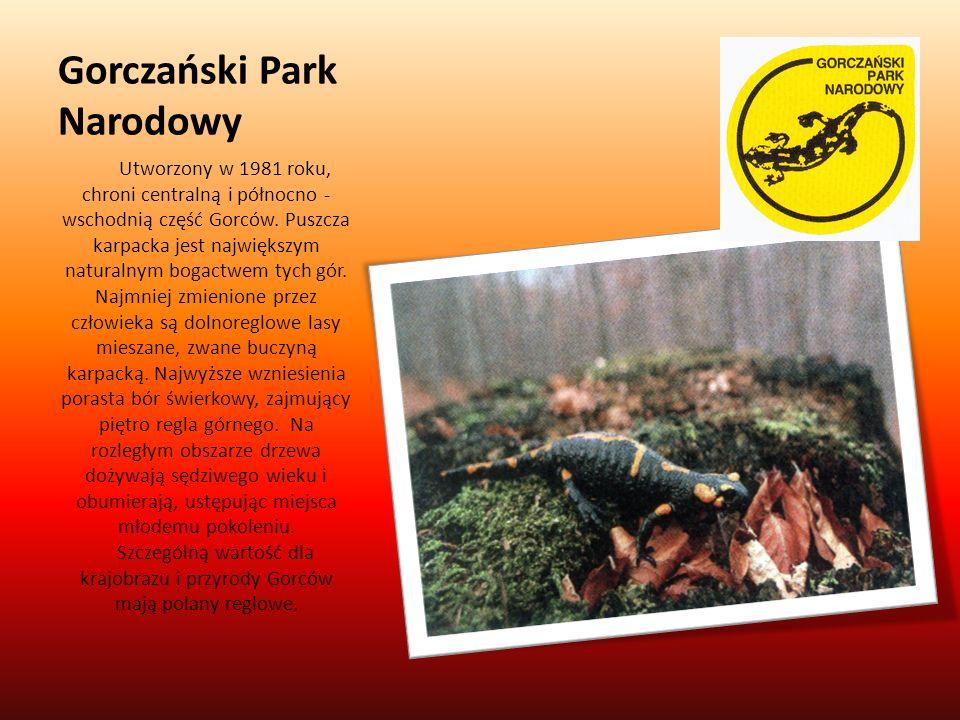 Gorczański Park Narodowy Utworzony w 1981 roku, chroni centralną i północno - wschodnią część Gorców. Puszcza karpacka jest największym naturalnym bog