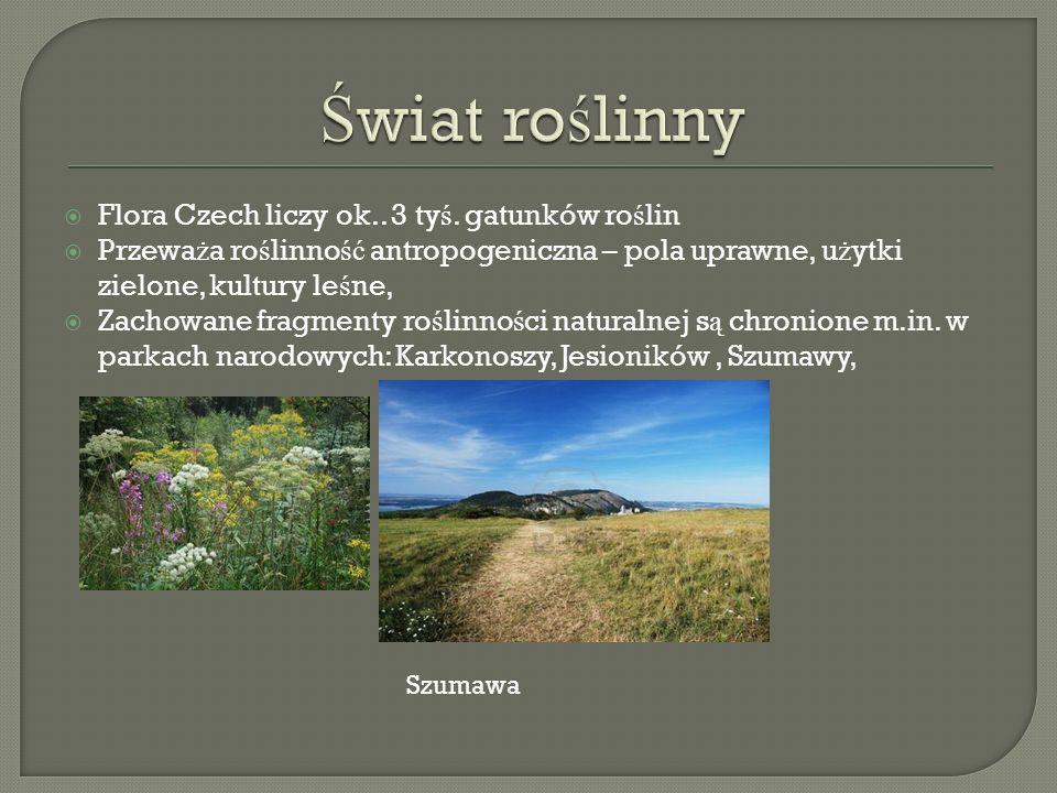Flora Czech liczy ok..3 ty ś.