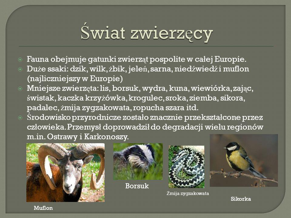 Fauna obejmuje gatunki zwierz ą t pospolite w ca ł ej Europie.
