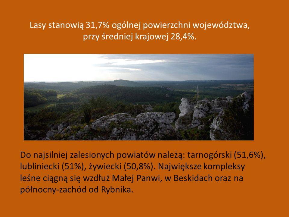 Lasy stanowią 31,7% ogólnej powierzchni województwa, przy średniej krajowej 28,4%. Do najsilniej zalesionych powiatów należą: tarnogórski (51,6%), lub