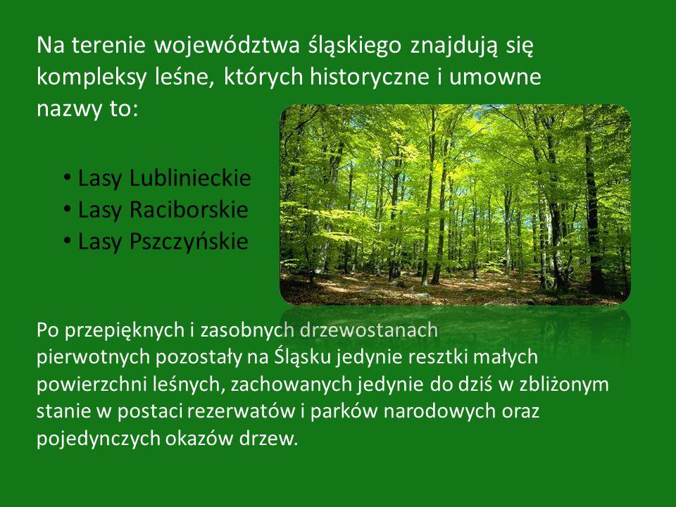 Po przepięknych i zasobnych drzewostanach pierwotnych pozostały na Śląsku jedynie resztki małych powierzchni leśnych, zachowanych jedynie do dziś w zb